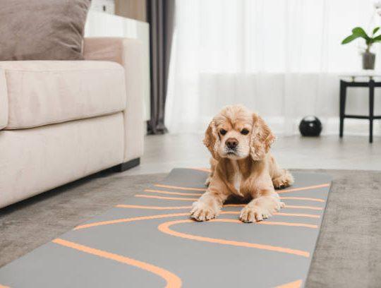 Comment décorer son salon avec un tapis de sol personnalisé ?